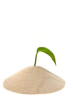 A fresh seedling growing out of a small pile of sand. All isolated on white background. Stock Photo - 6642594