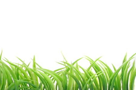 A line of fine grass blades growing in front of plain white background.