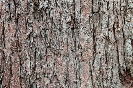 trunk  tree: Textura de fondo del tronco de �rbol Foto de archivo