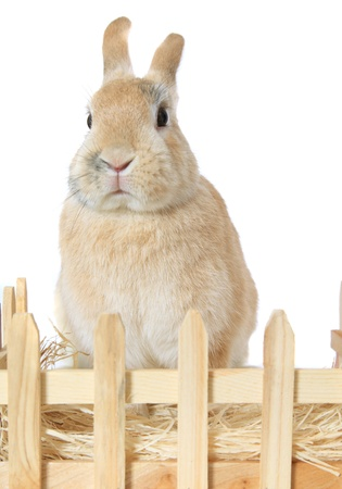 compounds: Cute little bunny. All on white background. Stock Photo