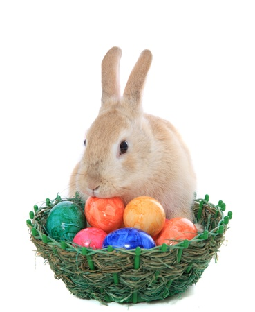 cony: Cute little easter bunny with basket full of colored eggs. All on white background.