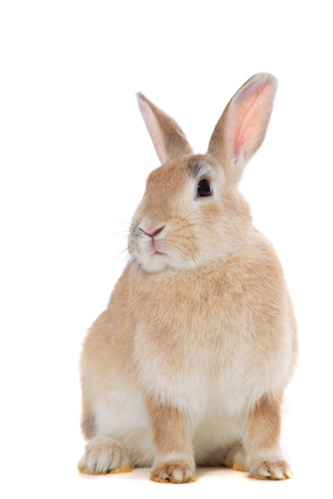 cony: Cute little bunny. All on white background. Stock Photo