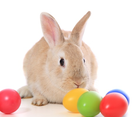 cowering: Cute little easter bunny with colored eggs. All on white background.