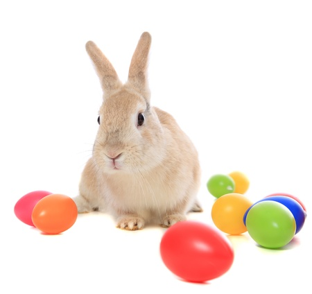 easter bunny: Cute little easter bunny with colored eggs. All on white background.