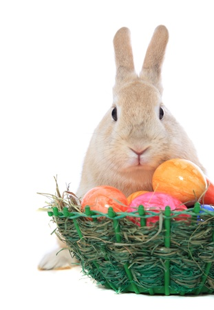 Cute little easter bunny with colored eggs. All on white background. photo