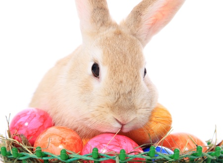 Cute easter bunny next to colored eggs. All on white background.