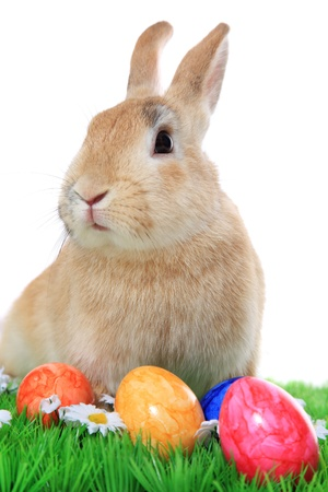 Cute easter bunny next to colored eggs. All on white background. photo