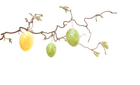 white eggs: Easter eggs hanging on bush. All on white background. Stock Photo