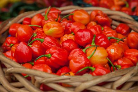 habanero: Basket full of fine grown habanero pepper