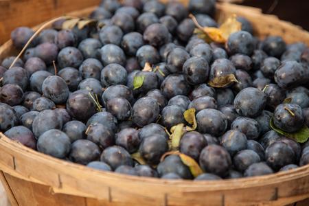 blueberries: Basket full of fine grown blueberries