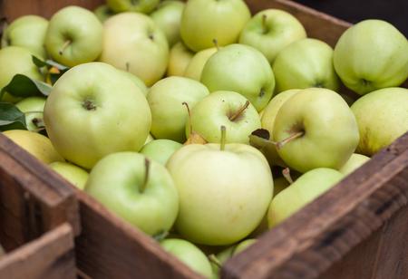 organic food: Box full of fine ripe apples