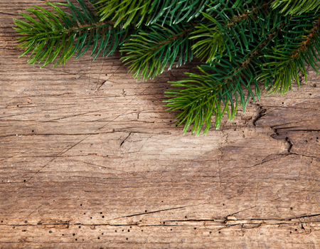 evergreens: Twigs of evergreens used as decoration Stock Photo