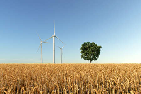 Grain field with tree and wind turbines
