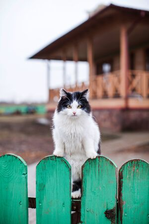 Black and white cat on a green fence in the village during the day. In the background, a wooden house.