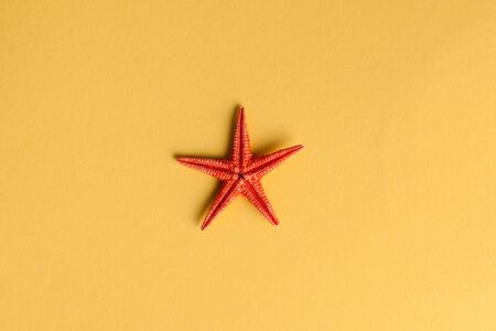 Tropical background. Flatlay with starfish and shells on a yellow background. The concept of travel, vacation by the sea. Copy space