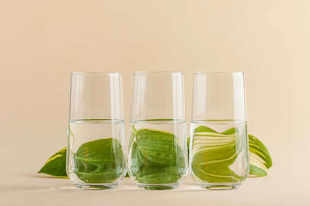 green leaf for glasses of water. Distorted image of water. Art concept, trending photo. Minimalism. Copy space. High quality photo