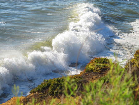 Large Pacific Ocean Waves Rumbling Into Foliage Covered Shore 写真素材