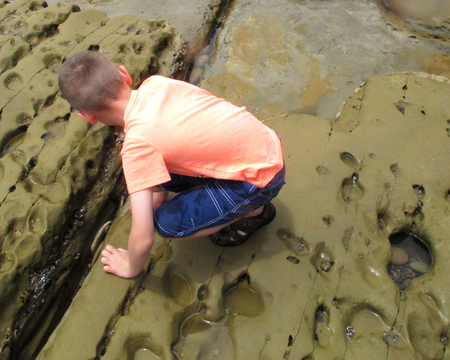 Young Boy Exploring a Crevice in the Tide Pools on a Pacific Ocean Shore