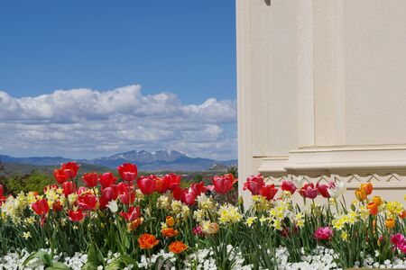 A tulip flower garden is overlooking a Valley with a mountain range in the distance