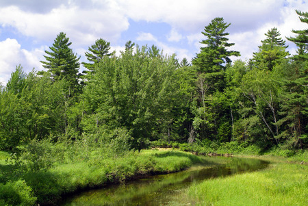 stoney: Stoney Creek in the Adirondack State Park, New York State