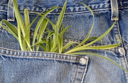 Green plant growing out of jeans pocket Stock Photo - 2643564