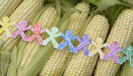 Conceptual image of paper people of many colors  hand colored with crayons, connected, over fresh corn.