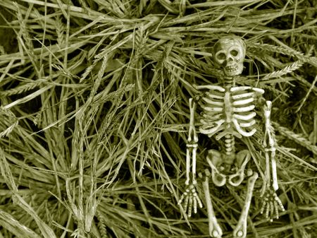 Spooky Autumn skeleton background Stock Photo - 4237545