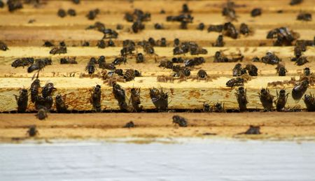 Bees gathering in the frames of a manmade hive photo