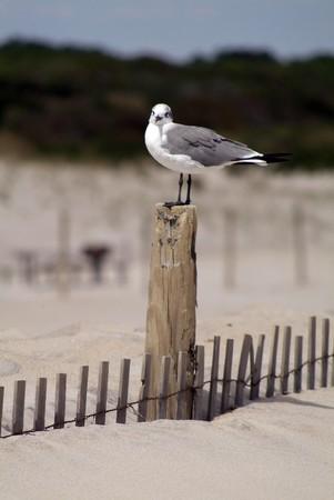 sea gull on the sandy beach Banco de Imagens
