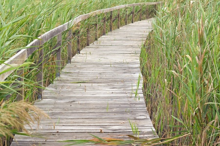 sawgrass: Boardwalk through reeds at Bool Lagoon in South Australia