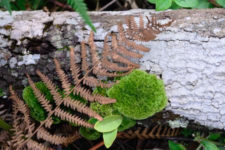 fungi: Leaf Fern Fungi