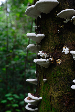 fungi: Mushroom White Fungi Tree Stock Photo