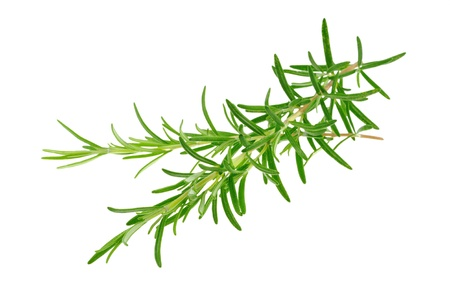 Rosemary branches Stock Photo - 13285597