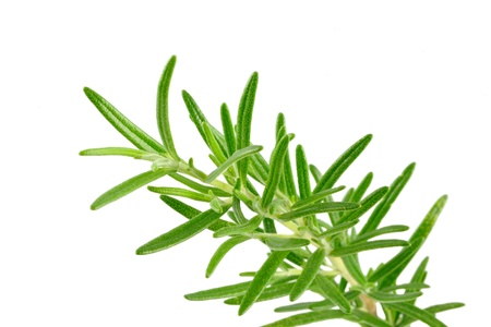 medicinal plants: Rosemary branches