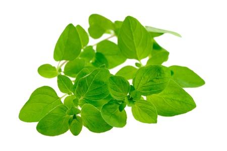marjoram: Majorjam leaves
