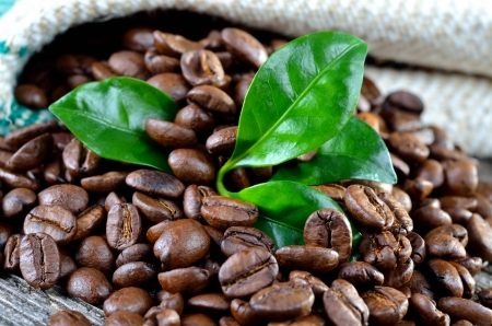planta de cafe: Los granos de caf� con hojas de una planta de caf� Foto de archivo