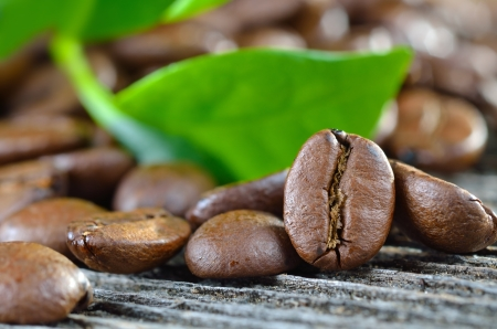 coffee plant: Coffee beans with leaves of a coffee plant
