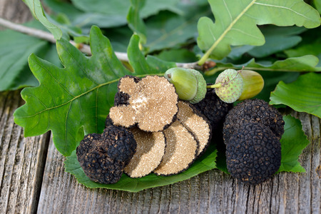 Black truffles from France autumn with leaves of oak, beech and hazel - tuber uncinatum