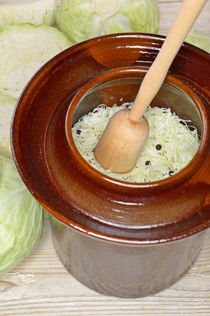 Food fermentation, making Sauerkraut White cabbage with a wooden pounder in a harvest crock Stock Photo