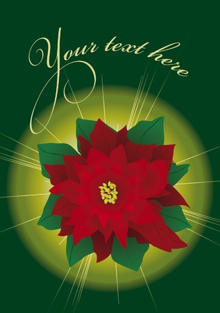 felicitation: Bright christmas poinsettia