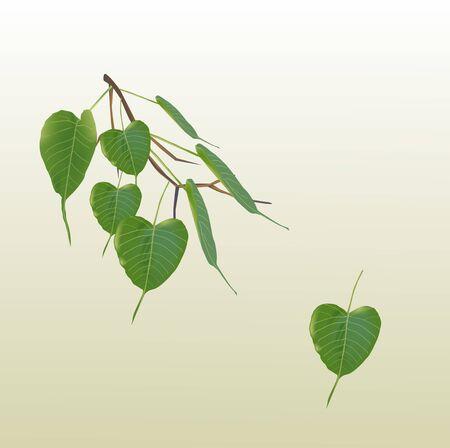 Vecteur de feuilles de bodhi vert frais Vecteurs