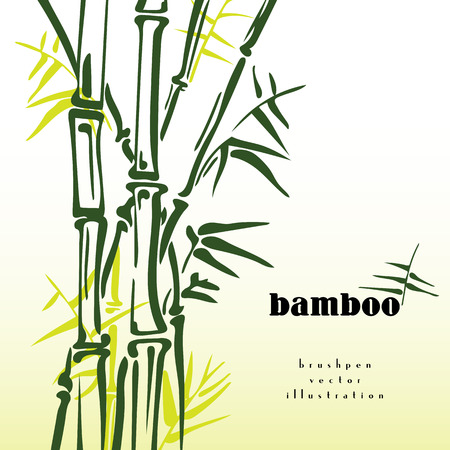 bamboo leaves: Green bamboo stems ink pen painting style. Simple bamboo illustration on white background. Bamboo bush. Bamboo leaves. Freshness in spring. Illustration