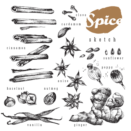 Flavour spices sketch food design big set for bakery shop. Vector isolated elements: cinnamon,  clove, cardamom, sunflower, poppy, seed, anise, vanilla, ginger, hazelnut, nutmeg. Tasty smells  and aroma. Ilustracja
