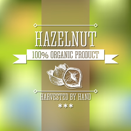 hazelnut: Hazelnut neat hand drawn monochrome label flavour modern design. Hazelnut sketch pictures with  text and ribbon on a vector colorful background.