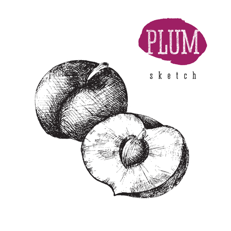 Plum and half of plum vector isolated black sketch illustration with title in hand drawn style. Plum, food.