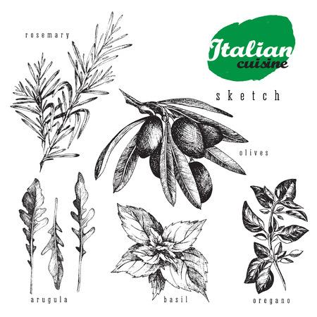 Italiaanse keuken kruiden en planten Vector geïsoleerde element set. Rozemarijn, oregano, olijven, basilicum en rucola realistische schets van de hand getekende stijl voor voedsel en keuken of organische vormgeving.