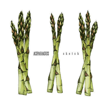 asparagus: 3 Bundle of asparagus of 3 and 2 stalks of asparagus vector isolated set color illustration sketch hand drawn on white background.