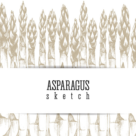 asparagus: Stalks of asparagus background vector isolated sketch hand drawn colorful illustration. Design layout.