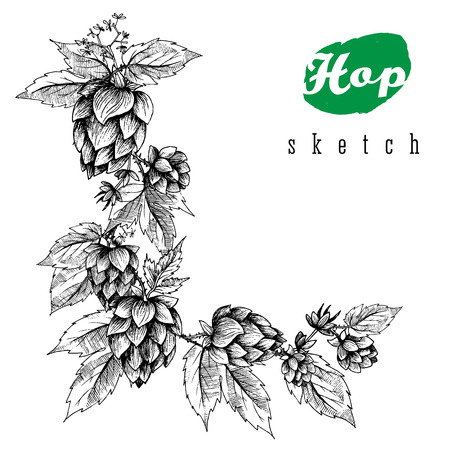 Beer hops hand drawn hops branches with leaves, cones and hops flowers, black and white, sketch and engraving design hops plants. All element isolated.