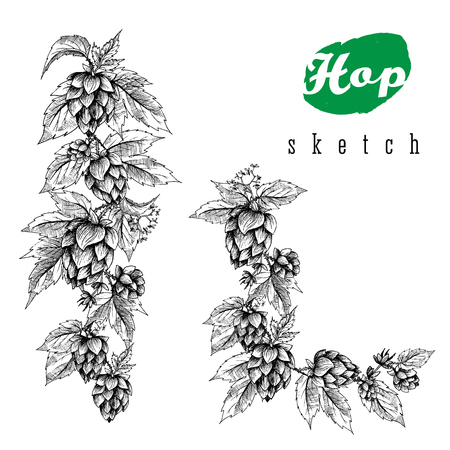 hops: Beer hops set of vertical border hand drawn hops branches with leaves, cones and hops flowers, black and white, sketch and engraving design hops plants. All element isolated.